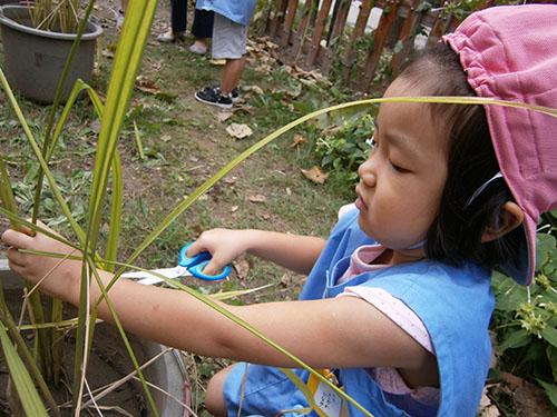 お月見会・稲や野菜の収穫